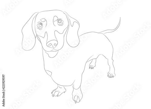 Fototapeta dog stands, lines, vector obraz