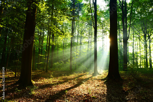 Papiers peints Forets Beautiful sunrise in forest