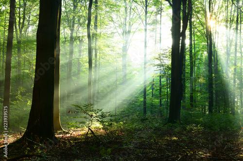 Türaufkleber Pistazie Beautiful sunrise in forest