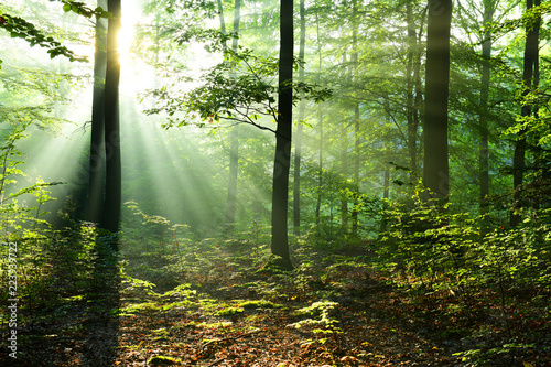 Poster Bomen Beautiful sunrise in forest