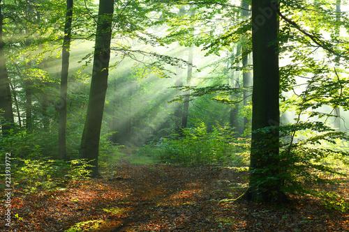 Foto auf Acrylglas Wald im Nebel Beautiful sunrise in forest