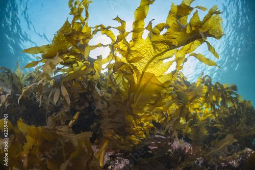 Fotografie, Obraz Seaweed