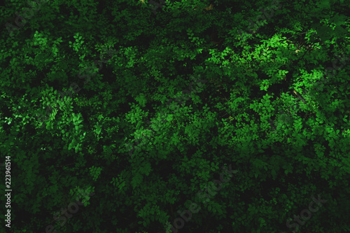 Fototapeten Wald green abstract background