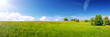 canvas print picture - Green field with yellow dandelions and blue sky. Panoramic view to grass and flowers on the hill on sunny spring day