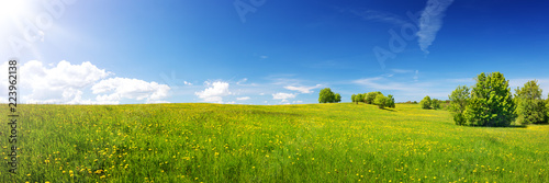 Poster Meadow Green field with yellow dandelions and blue sky. Panoramic view to grass and flowers on the hill on sunny spring day