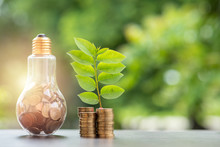 Energy Saving. Stacks Of Coins Growing In Light Bulb And Tree Growing On Stacks Of Coins And Tree Nature Background. Saving, Natural Energy And Financial Concept.