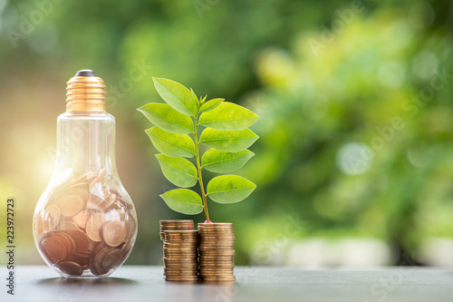 Obraz Energy saving. stacks of coins growing in light bulb and tree growing on stacks of coins and tree nature background. Saving, Natural energy and financial concept. - fototapety do salonu