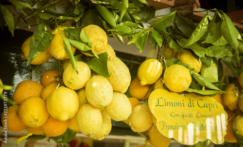 Lemons on Capri island