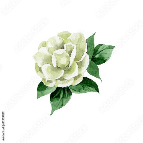 Cuadros en Lienzo Watercolor white camellia flower