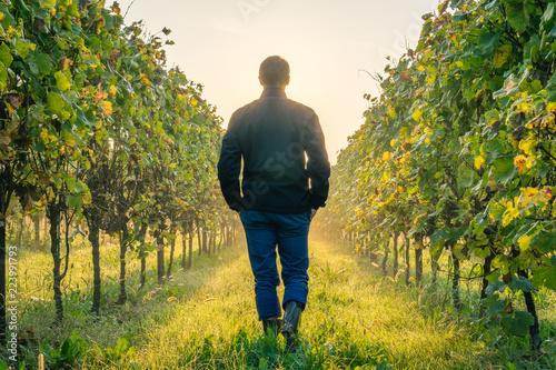 Fotografie, Obraz  Young farmer and businessman standing admiring his vineyard