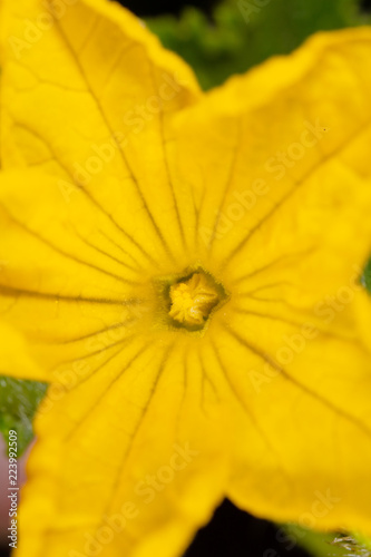 Yellow flower on nature as background.