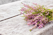Bouquet Of Purple Scotch Heather Bush (Calluna Vulgaris, Erica, Ling, Also Called Ling Plant On Moorland) On A Grey Old Wooden Background