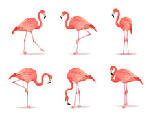 Red And Pink Flamingo Set Vector Illustration. Can Be Used As Pattern Or Fashion Print On Fabric. Cool Exotic Bird In Different Poses Decorative Design Elements Collection. Flamingo Isolated On White
