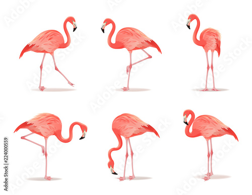 Garden Poster Flamingo Red and pink flamingo set vector illustration. Can be used as pattern or fashion print on fabric. Cool exotic bird in different poses decorative design elements collection. Flamingo Isolated on white