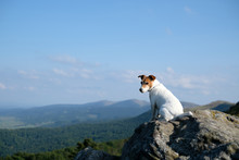 Alone White Dog Sitting On Rock Against The Backdrop Of An Incredible Mountain Landscape