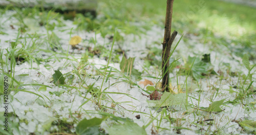 Staande foto Paardebloemen en water closeup of hailstones on the grass after strong hailstorm