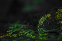 Green And Yellow Fluorescent M...