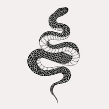 Hand Drawn Vintage Snake Illus...