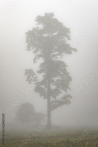 Fotografie, Obraz  Lonely tree in the mist in northern Thailand
