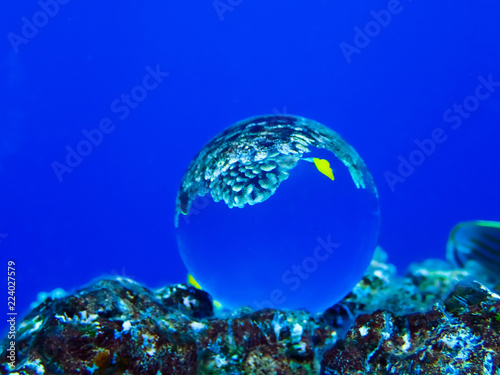 Photo  Bright Yellow Fish and Coral in Glass Ball Under Water