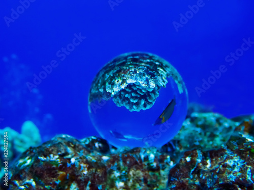 Photo  Diver and Tropical Fish Wrasse Captured in Glass Ball Under Water on Blue Backgr