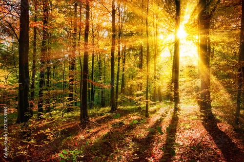 Foto op Canvas Herfst Licht- und Schattenspiel im Wald zu Herbstzeit
