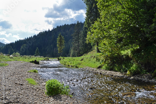 Mountain river, forest, sunny meadow general plan