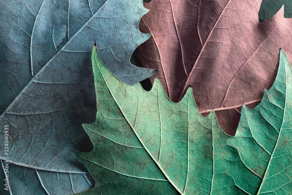 Fototapety, obrazy: Macro image of plane tree leaves, background