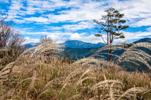 Japanese Silvergrass With Mountains And Sky