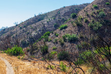 Forest Fire Damage Along Hiking Trails Of Southern California