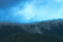 Blue Mist Over Pine Trees In The Forest In The Mountains. Carpathians Ukraine