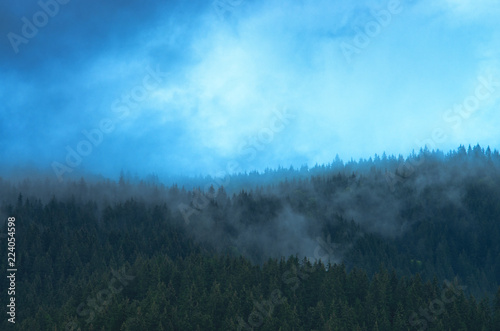 Montage in der Fensternische Pool Blue mist over pine trees in the forest in the mountains. Carpathians Ukraine