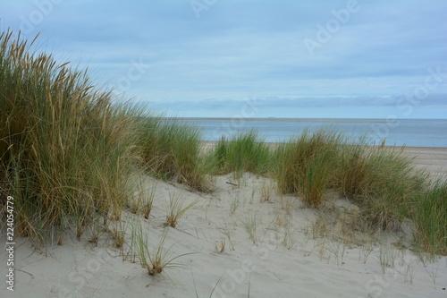 Spoed Foto op Canvas Noordzee Strandhafer in den Sanddünen an der Nordseeküste in den Niederlande
