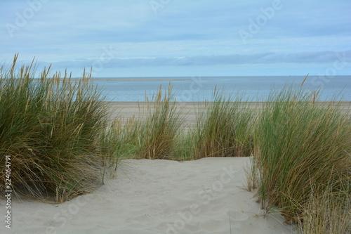 Strandhafer in den Dünen mit viel Sand  und blauem Himmel, an der Nordsee in den Niederlanden © Claudia Evans