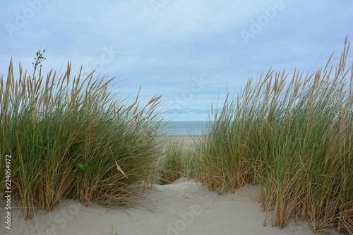Blick durch den Strandhafer in den Dünen zur Nordsee mit blauem Himmel