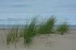 Dünengras am Sandstrand an der Nordseeküste auf der Insel Zeeland in den Niederlande