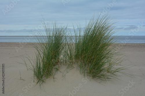 Spoed Foto op Canvas Noordzee Strandhafer in den Sanddünen an der Nordseeküste, mit Meer und blauem Himmel im Hintergrund