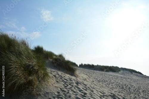 Foto op Plexiglas Noordzee Sanddünen und Dünengras an der Nordsee in den Niederlanden