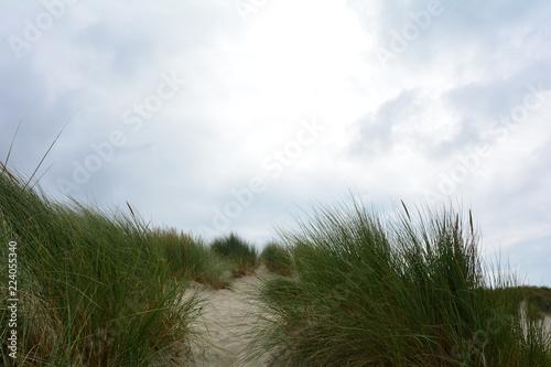 Spoed Foto op Canvas Noordzee Strandhafer, Sanddünen und blauer Himmel an der Nordseeküste von den Niederlanden