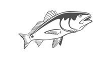 Fish Drum