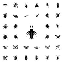 Cockroach Icon. Insect Icons Universal Set For Web And Mobile