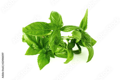 Fotografie, Obraz  fresh basil leaf isolated on whit background