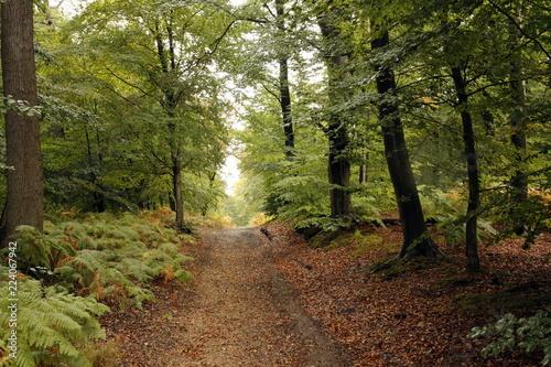 Spoed Foto op Canvas Weg in bos Forêt de Saint-Germain-en-Laye