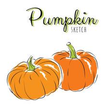 Sketch Pumpkins. Vector Paint ...