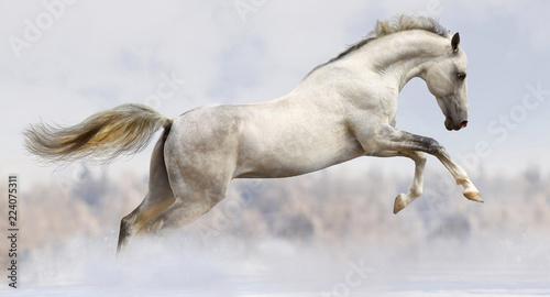 Fotografia white horse jumping