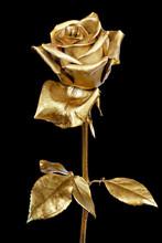 Golden Rose Isolated On Black Background