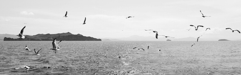 A flock of birds over the water. Black and white landscape with birds and water. Seagulls over Lake Baikal