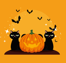 Halloween Card With Pumpkin And Cats Blacks