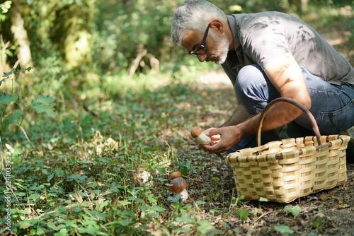 Man in hood picking ceps mushrooms Fototapeta