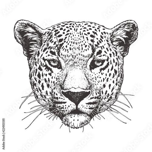 Cuadros en Lienzo Portrait of Leopard, hand-drawn illustration, vector